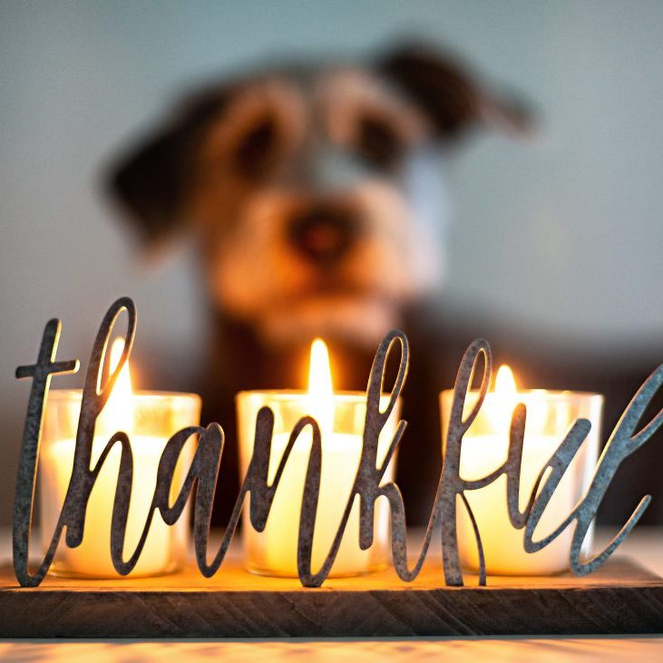 Thankful gratitude lit candles glowing with face of dog in blurred background